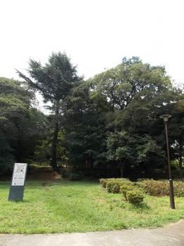 戸山公園 箱根山-2.jpg