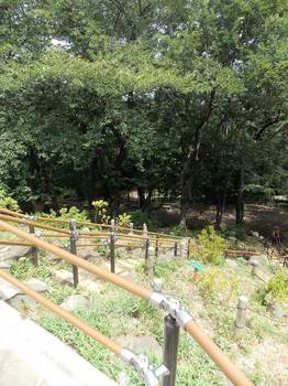 戸山公園 箱根山-6.jpg