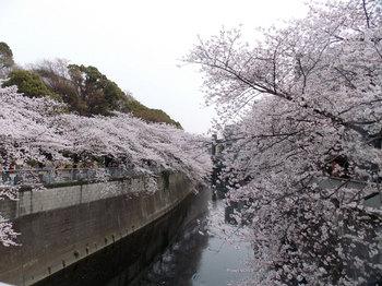 桜-10.jpg