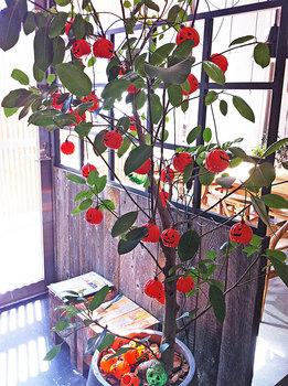 鉢植え.jpg